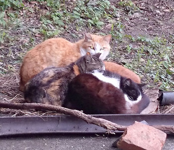 160605cats.jpg